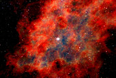Supernova remnant from a star collapse