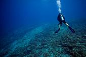 Diver surveying dead coral reef