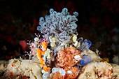 Entoprocta sessile aquatic animal