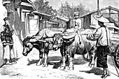 Ox-drawn cart in Shanghai, 1860s