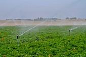 Sprinkler irrigation