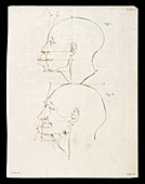Facial angle theory of Petrus Camper, illustration