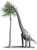Sauroposeidon, illustration