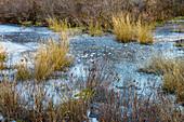 Small Frozen Wetland