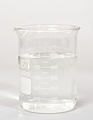 Laboratory Beaker with Clear Liquid