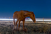 Horse by a road at night, time-exposure image