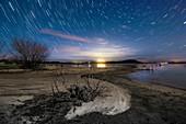Star trails over lake shoreline, time-exposure image