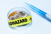 Biohazard tape on a Petri dish