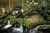 Mullet Creek