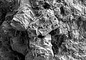 Rock Salt or Halite, SEM