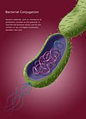 Antibiotic Resistance, Illustration
