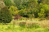 Old Field Habitat