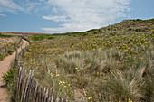 Erosion control on sand dunes