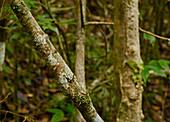 Camouflaged Gecko