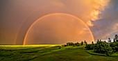 Double rainbow over canola field