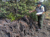 Invasive species prevention, Hawai'i Volcanoes National Park