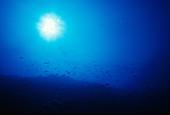 Reef Slope Underwater Scene