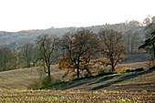 Stubble fields & autumn oaks