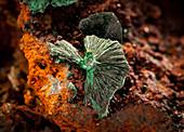 Malachite Crystals