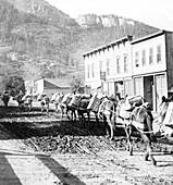 Pack Train, 1905