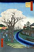 Tama River Cherry Blossoms, 1856