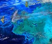 Algae bloom in the Bering Sea, satellite image