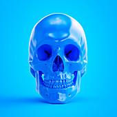 Illustration of a blue skull