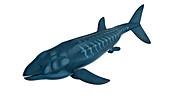 Illustration of a Leedsichthys