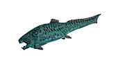 Illustration of a dunkleosteos