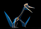 Quetzalcoatlus skeleton, illustration