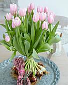 Tulipa 'Gabriella'