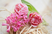 Hyacinthus 'Johanna', Tulipa 'Endless Love'
