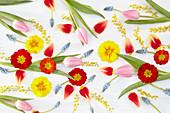 Frühlingscollage mit Tulpen, Primeln,Traubenhyazinthen und Mimosen