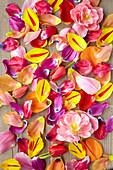 Collage aus Tulpen - Blütenblättern