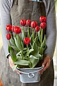 Frau hält Topf mit roten Tulpen
