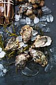 Fresh oysters on seaweed