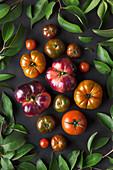 Verschiedene Tomaten auf schwarzem Hintergrund