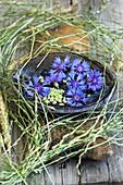 Schale mit Blüten der Kornblume, umrahmt von Gräsern