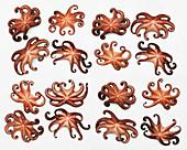 Mehrere Kraken auf weissem Untergrund