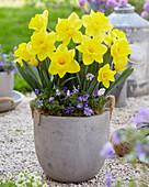 Narcissus 'Nr 70B'