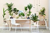 Zimmerpflanzen - Arrangement