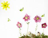 Legebild aus Blüten von Lenzrose und Ranunkel, Moos und Blättchen