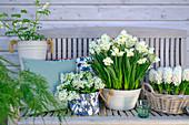 Frühlings-Arrangement mit weißen Blüten: Hyazinthen, Narzissen, Puschkinie und Tränendes Herz
