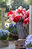 Tulipa 'Delight Mix'