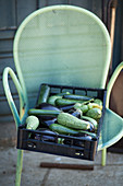 Courgettes and aubergines in a crate on a garden chair