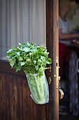 Celery in a plastic bag hanging on a wooden door