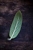 A sage leaf on a wooden surface