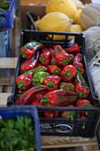 Frische Paprika in Steige auf dem Markt