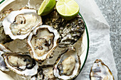 Raw Oysters served on ice in round enamel bowl