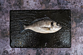 A fresh sea bream on black slate
